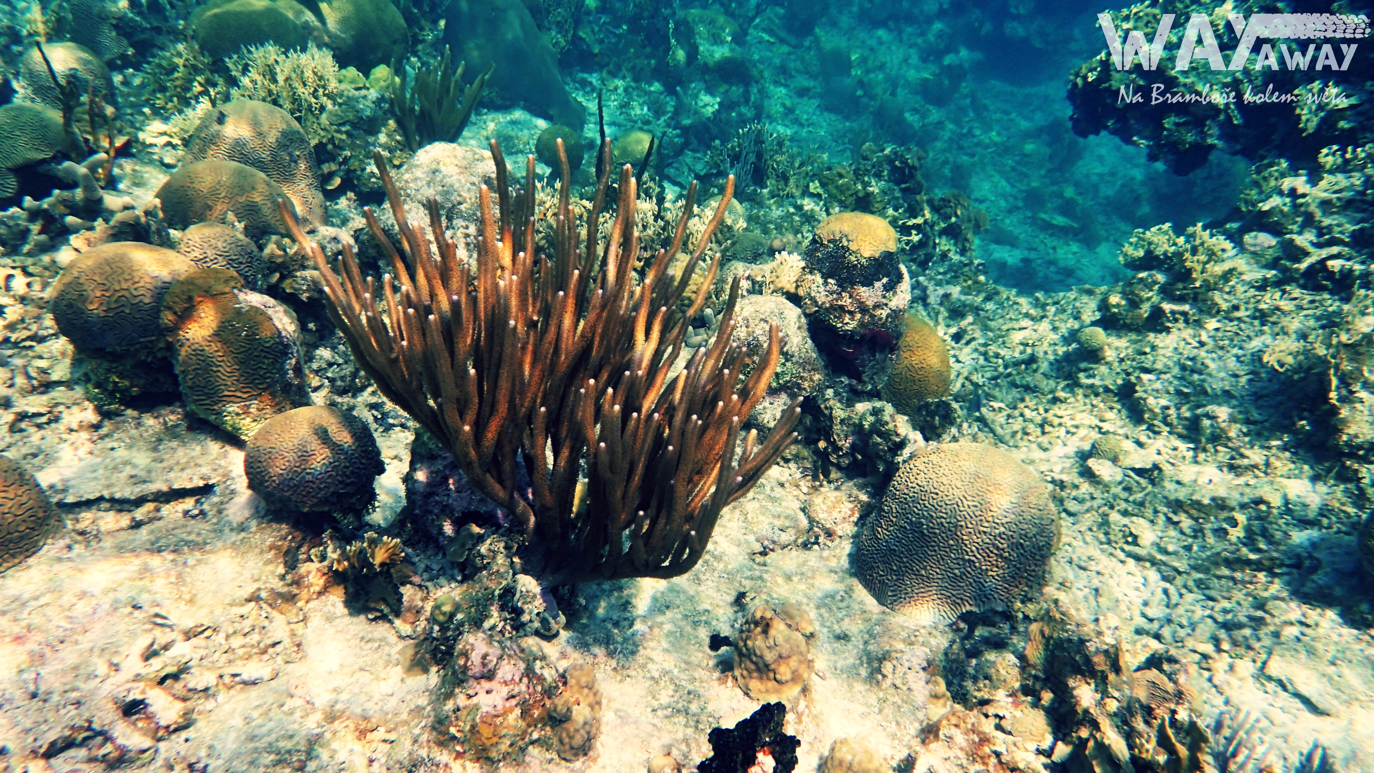 Podvodní svět Karibiku