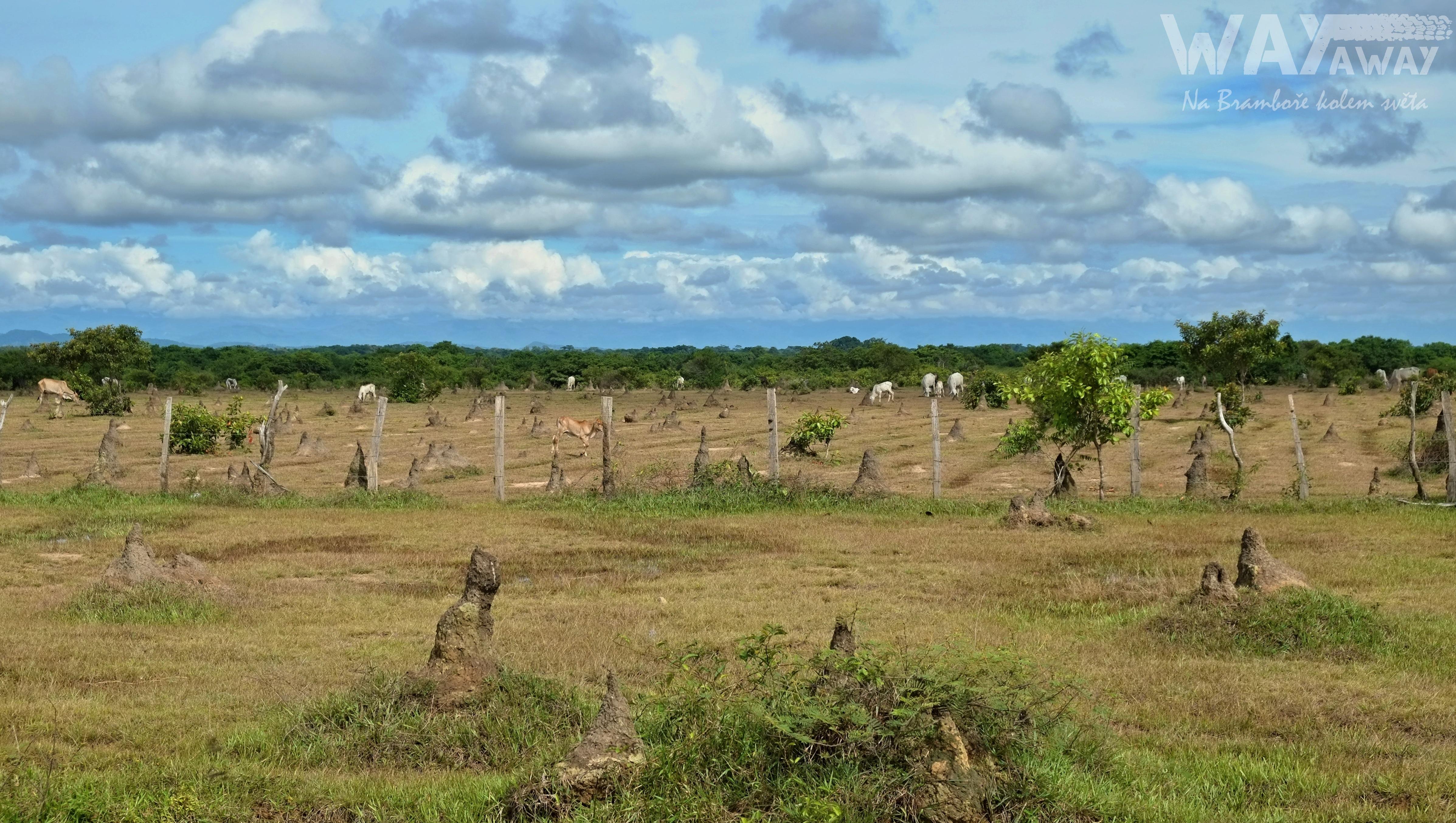 Termitiště na severu Kolumbie