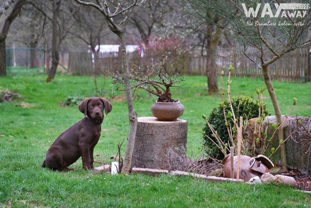 Deli na zahradě